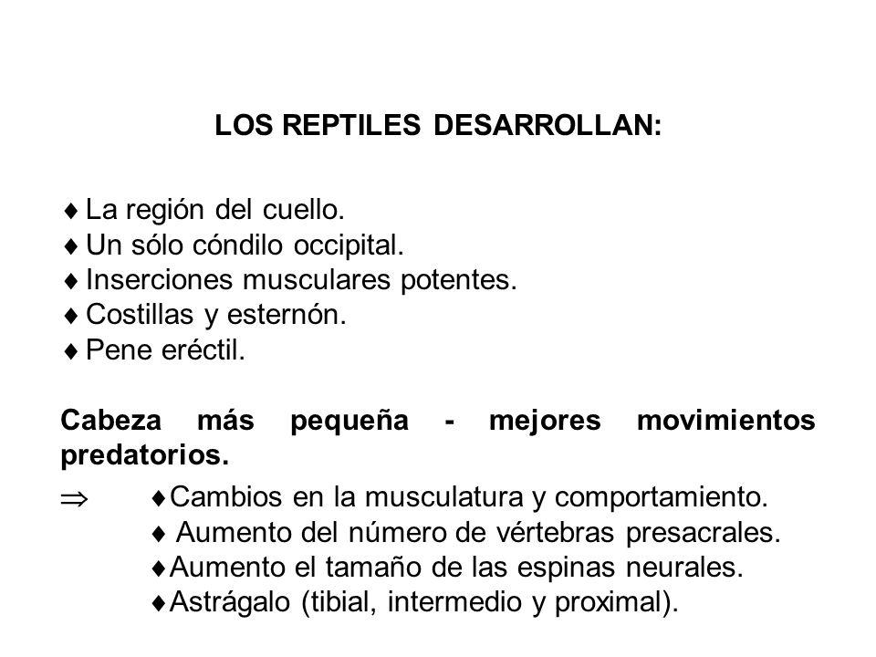LOS REPTILES DESARROLLAN: