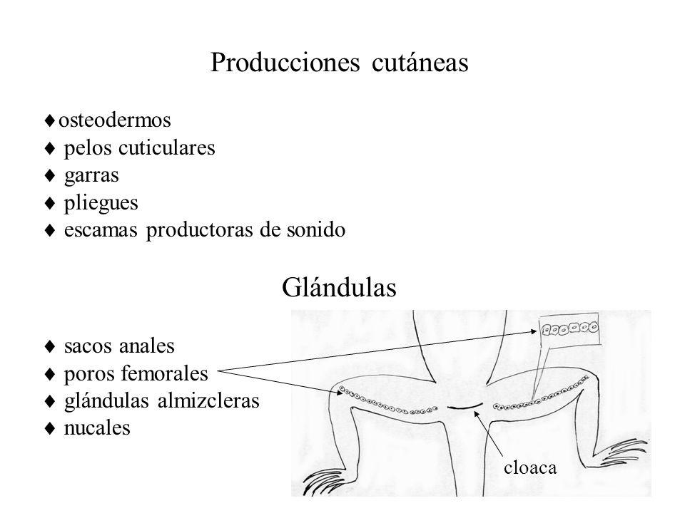 Producciones cutáneas