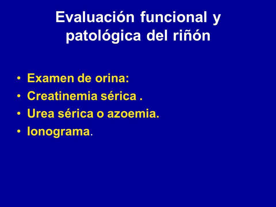 Evaluación funcional y patológica del riñón