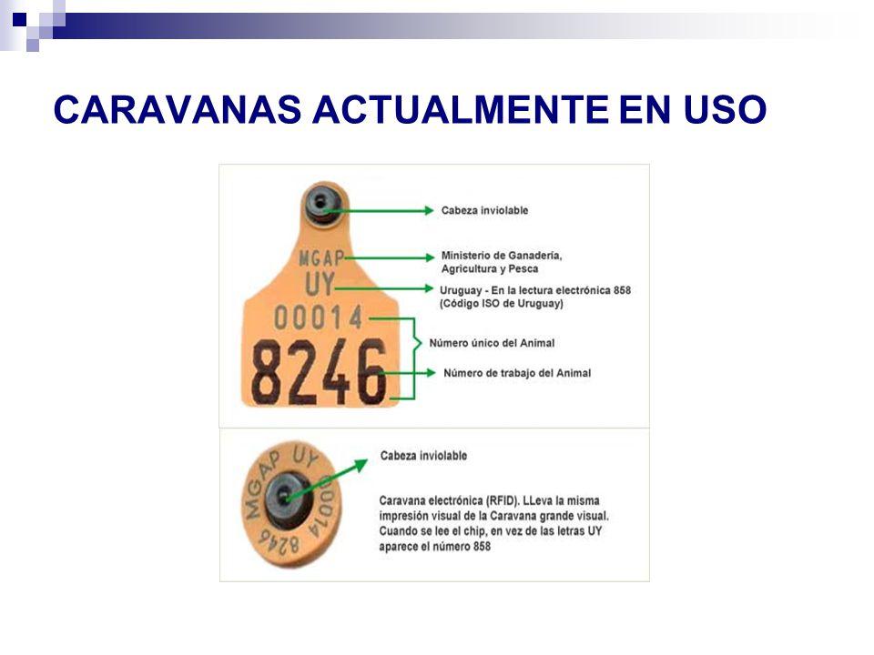 CARAVANAS ACTUALMENTE EN USO