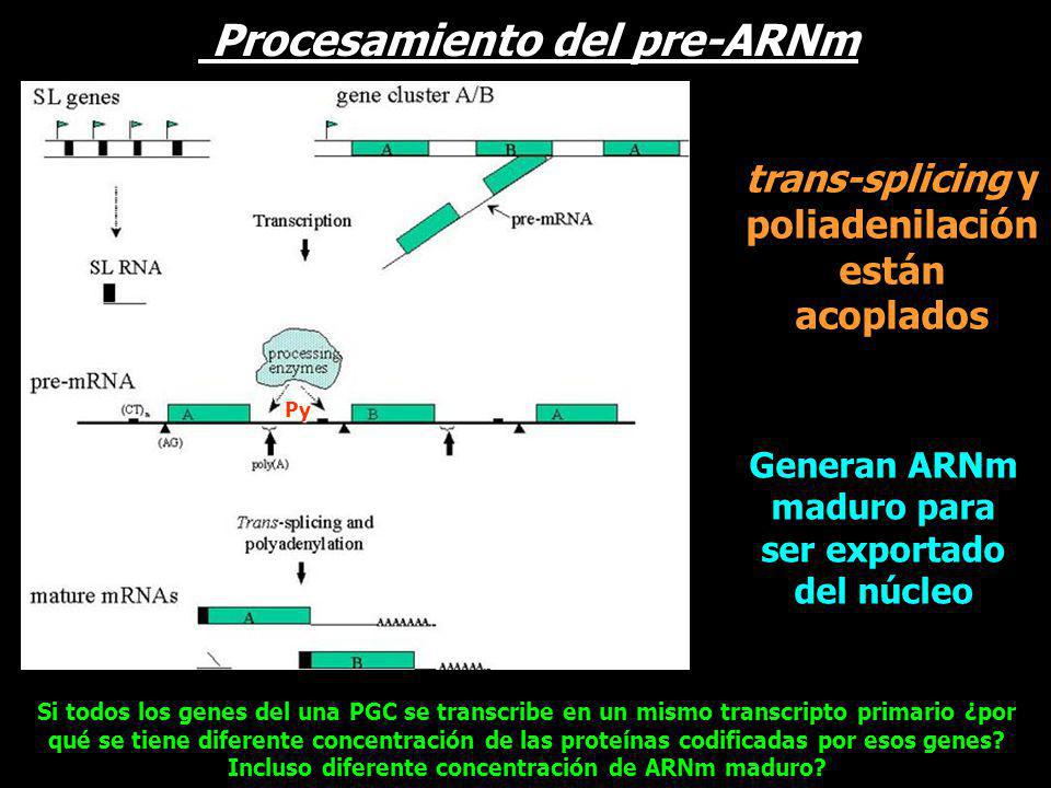 Procesamiento del pre-ARNm