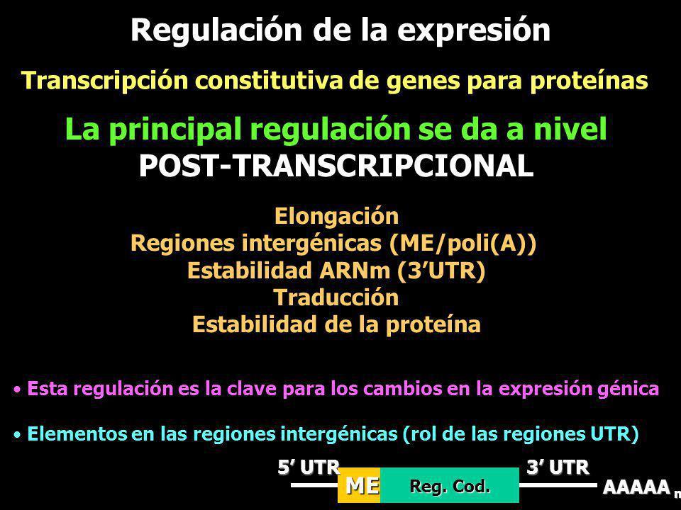 Regulación de la expresión