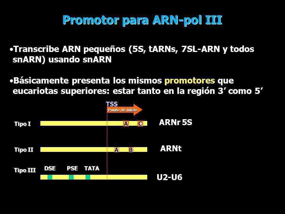 Promotor para ARN-pol III