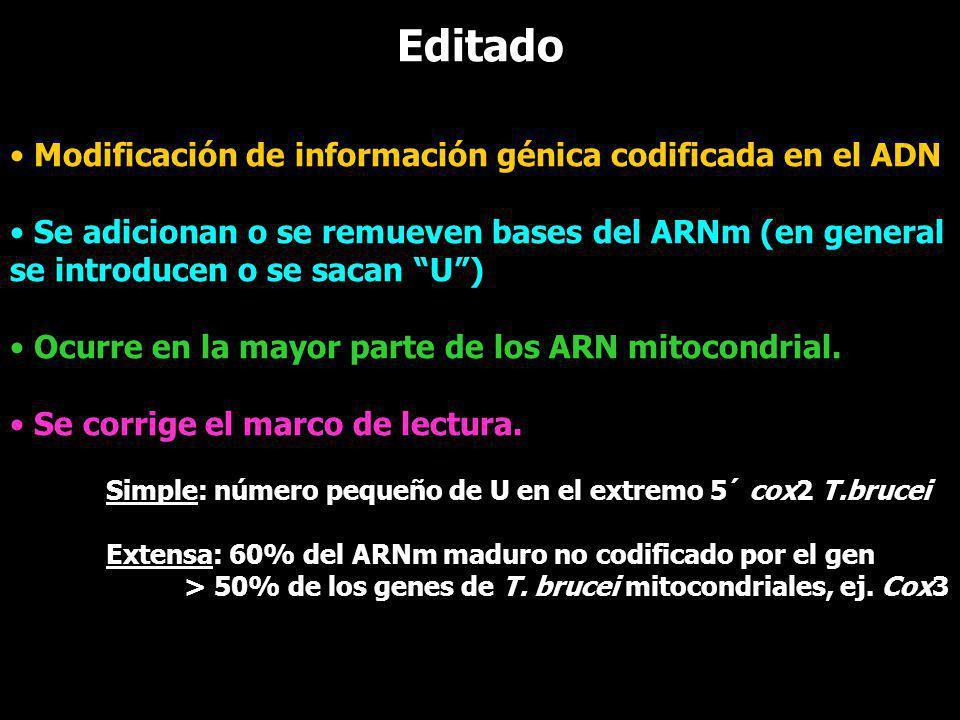 Editado Modificación de información génica codificada en el ADN