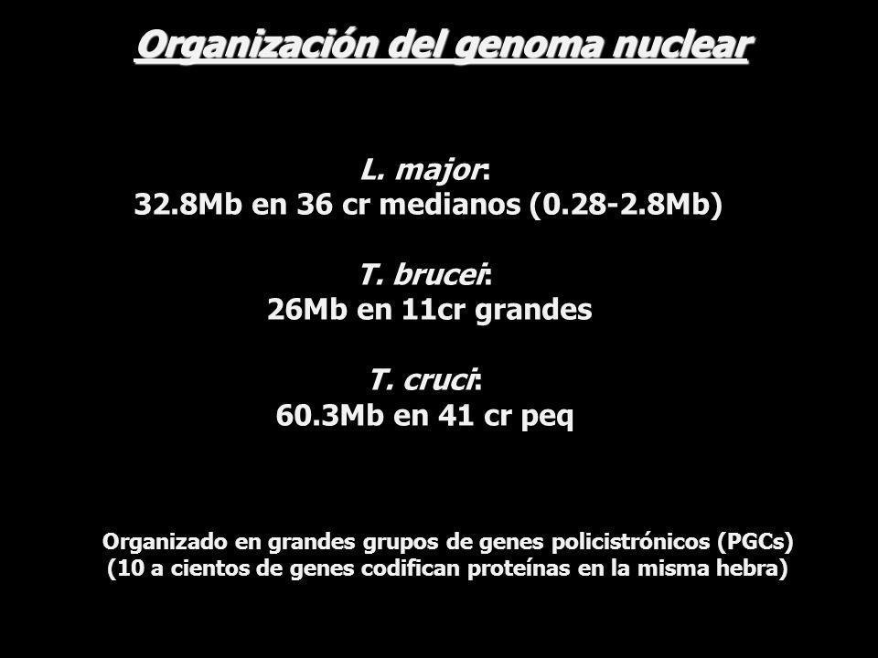 Organización del genoma nuclear
