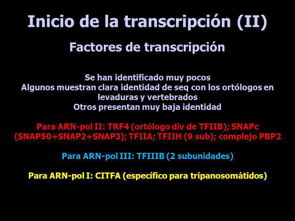 Inicio de la transcripción (II)
