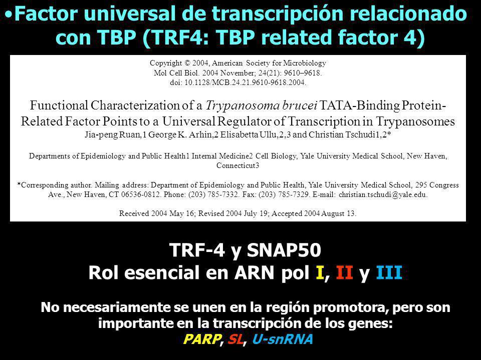 Rol esencial en ARN pol I, II y III