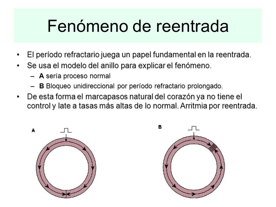 Fenómeno de reentrada El período refractario juega un papel fundamental en la reentrada. Se usa el modelo del anillo para explicar el fenómeno.