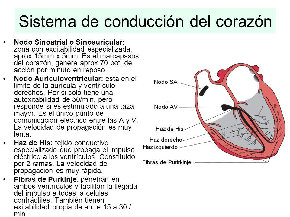 Sistema de conducción del corazón