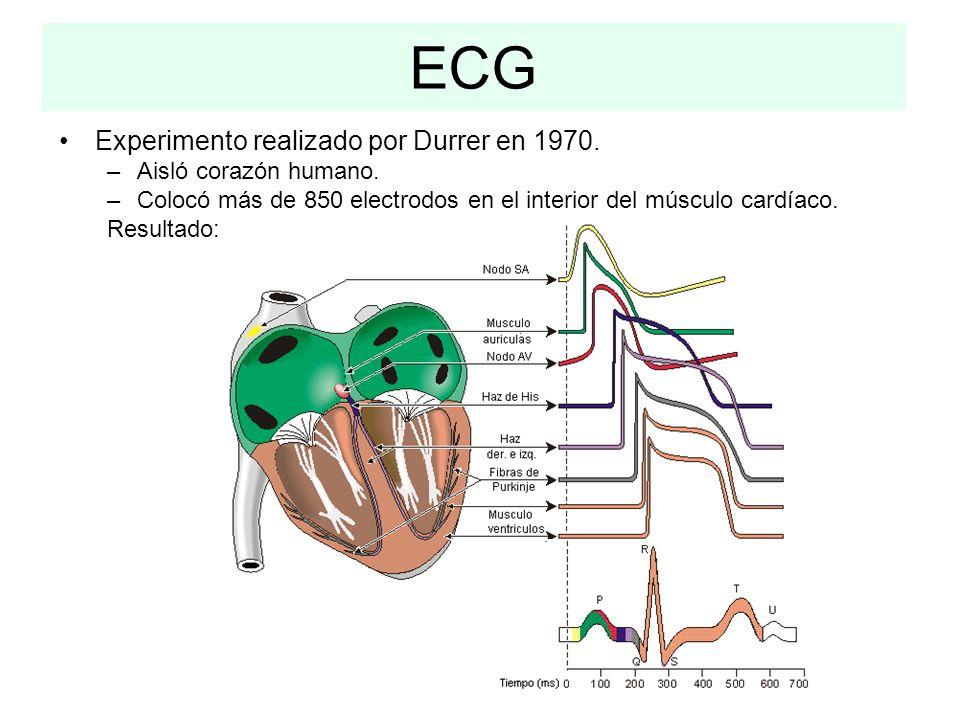 ECG Experimento realizado por Durrer en 1970. Aisló corazón humano.