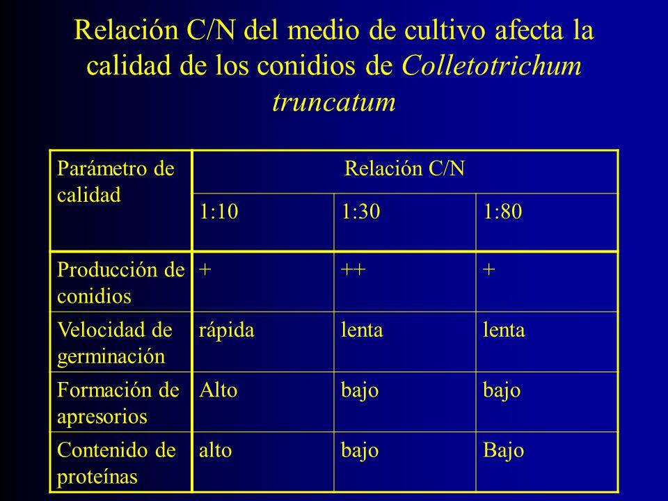 Relación C/N del medio de cultivo afecta la calidad de los conidios de Colletotrichum truncatum