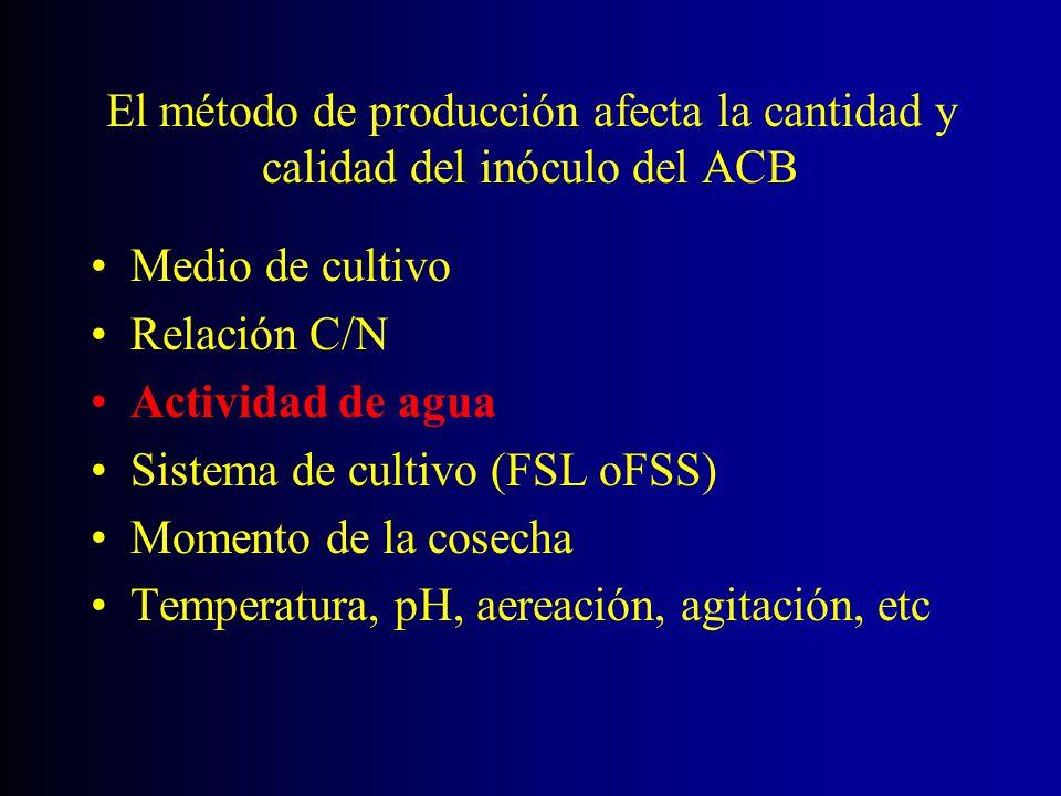 El método de producción afecta la cantidad y calidad del inóculo del ACB