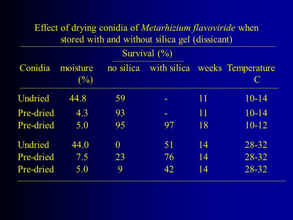 Effect of drying conidia of Metarhizium flavoviride when stored with and without silica gel (dissicant)