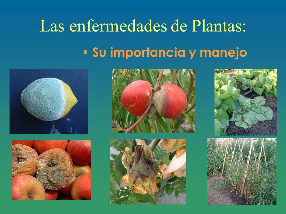 Las enfermedades de Plantas: