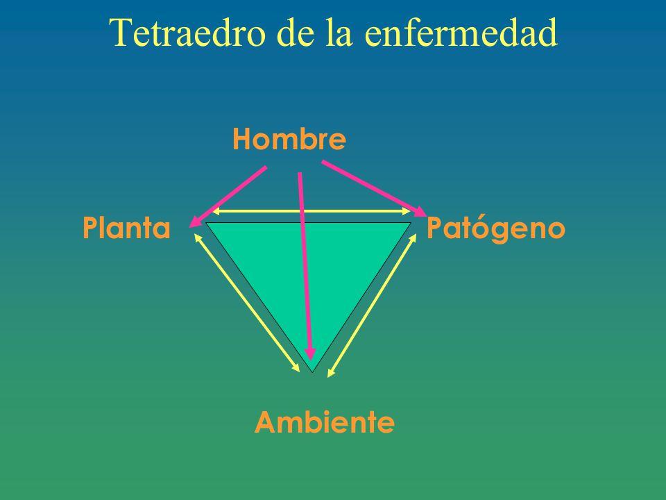 Tetraedro de la enfermedad