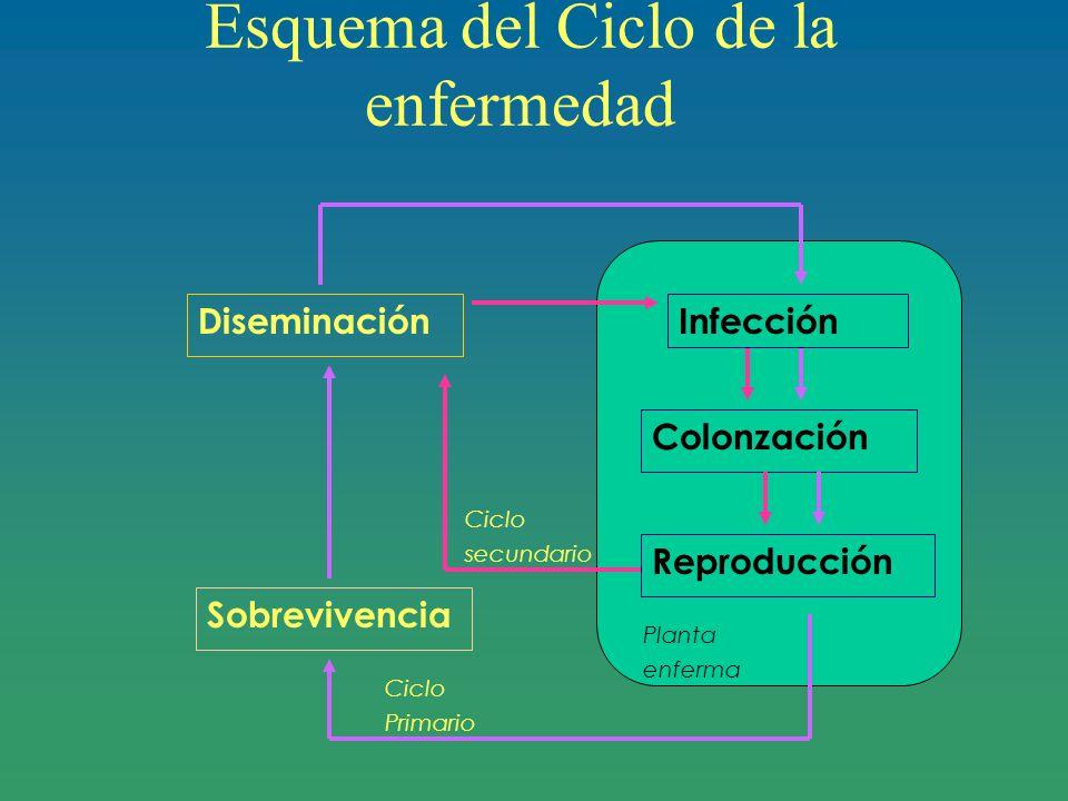 Esquema del Ciclo de la enfermedad
