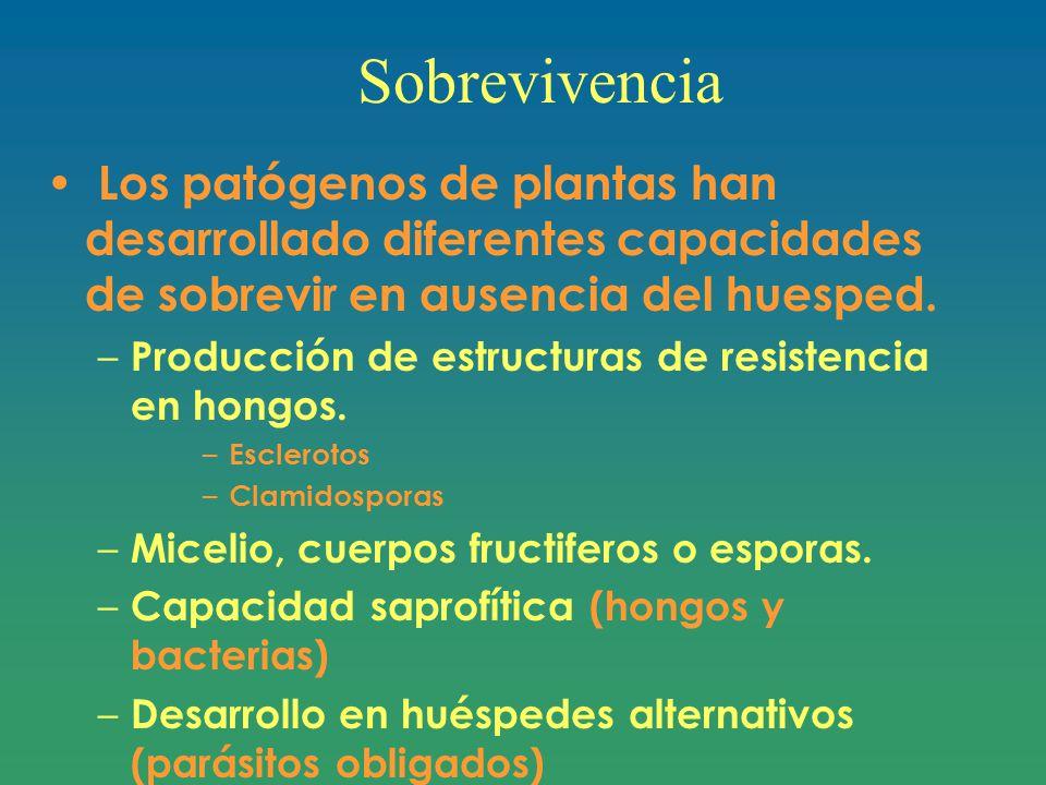 Sobrevivencia Los patógenos de plantas han desarrollado diferentes capacidades de sobrevir en ausencia del huesped.
