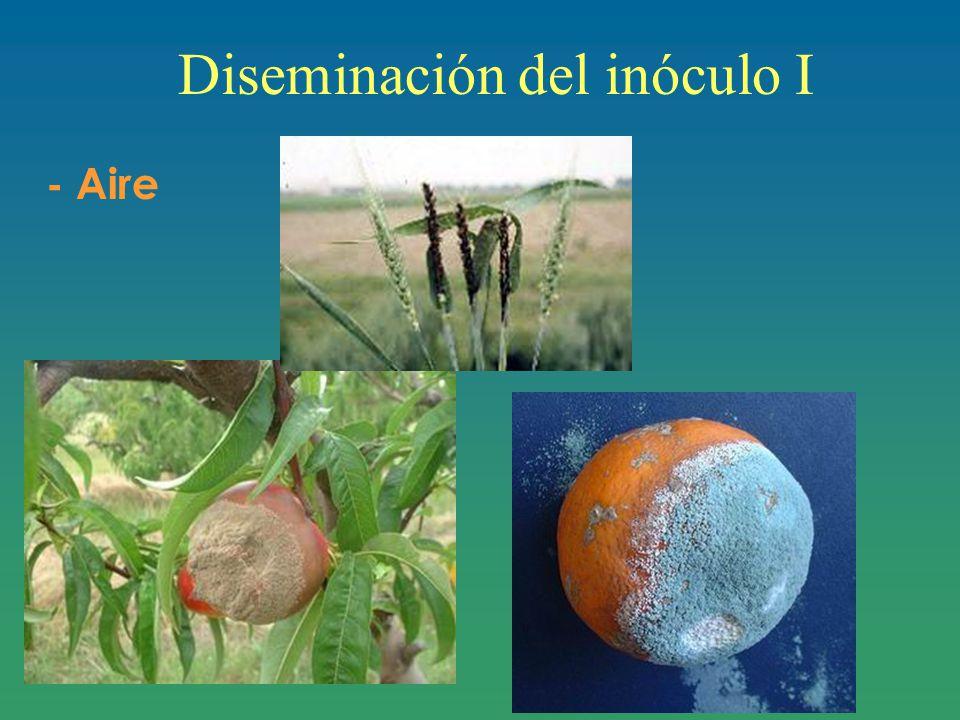 Diseminación del inóculo I