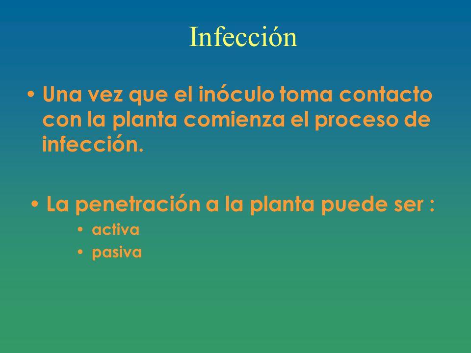 Infección Una vez que el inóculo toma contacto con la planta comienza el proceso de infección. La penetración a la planta puede ser :