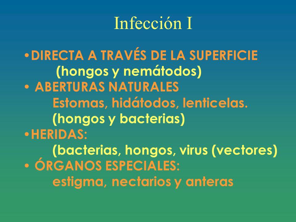 Infección I DIRECTA A TRAVÉS DE LA SUPERFICIE (hongos y nemátodos)