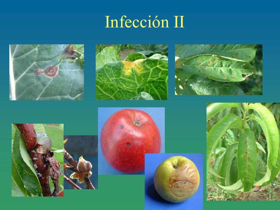Infección II