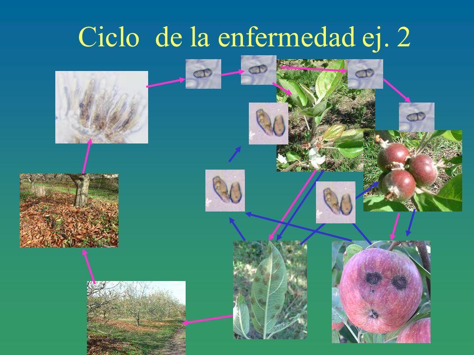 Ciclo de la enfermedad ej. 2