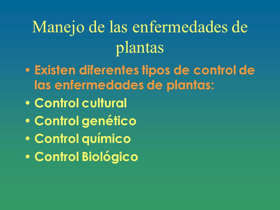 Manejo de las enfermedades de plantas
