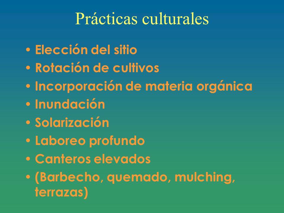 Prácticas culturales Elección del sitio Rotación de cultivos