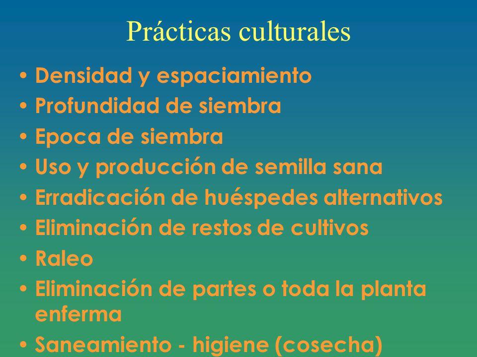 Prácticas culturales Densidad y espaciamiento Profundidad de siembra