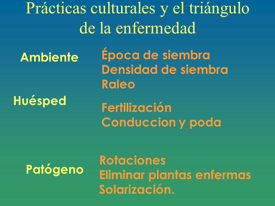 Prácticas culturales y el triángulo de la enfermedad