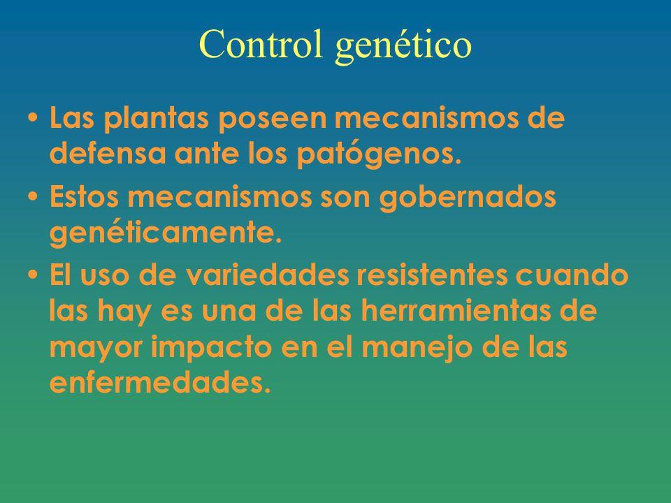 Control genético Las plantas poseen mecanismos de defensa ante los patógenos. Estos mecanismos son gobernados genéticamente.