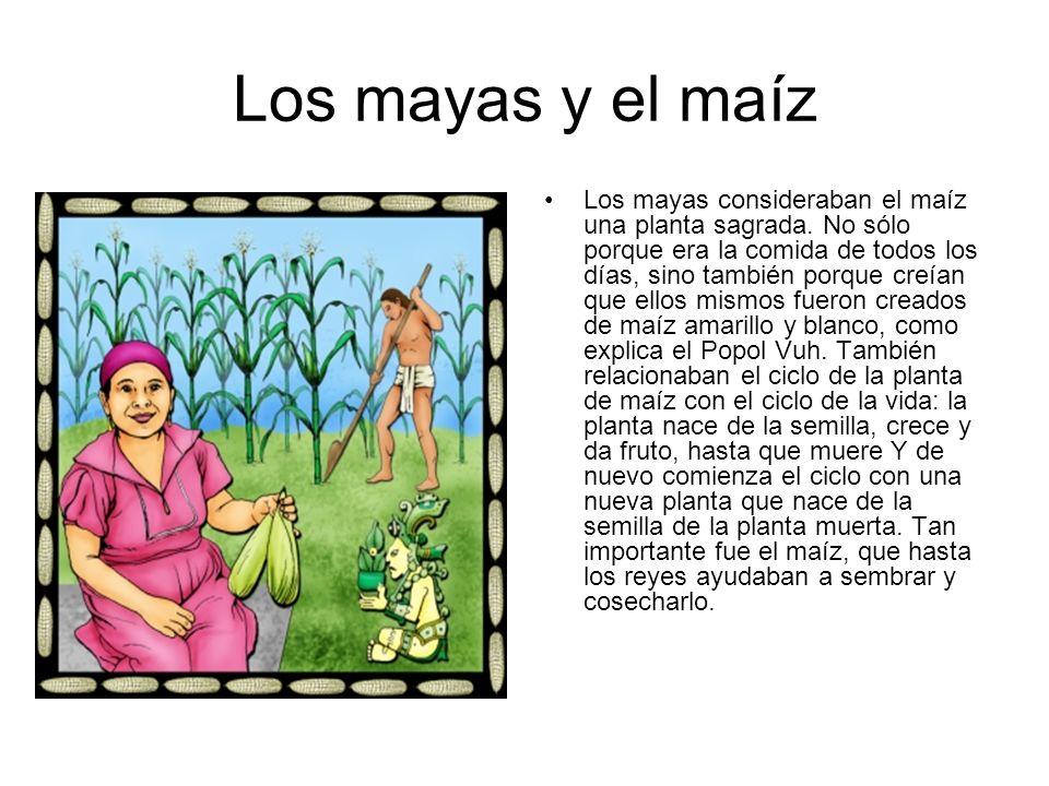 Los mayas y el maíz