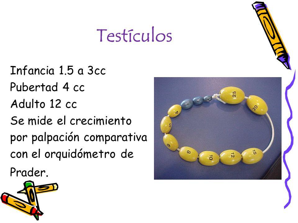 Testículos Infancia 1.5 a 3cc Pubertad 4 cc Adulto 12 cc