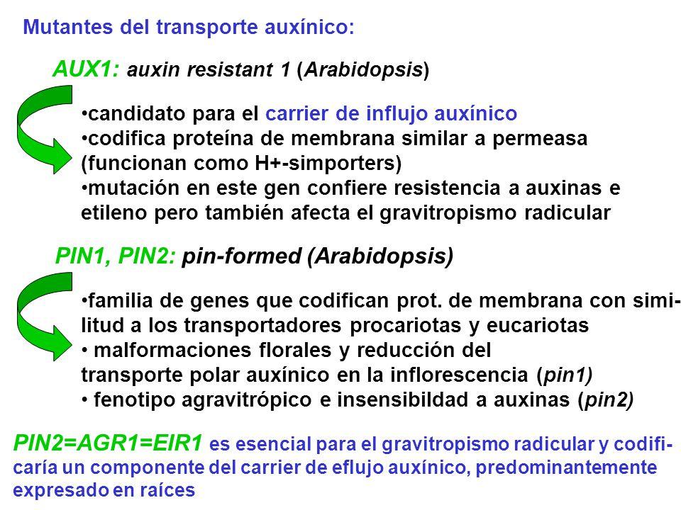 AUX1: auxin resistant 1 (Arabidopsis)