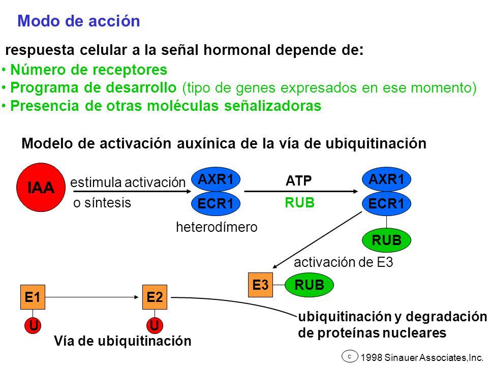 Modo de acción IAA respuesta celular a la señal hormonal depende de: