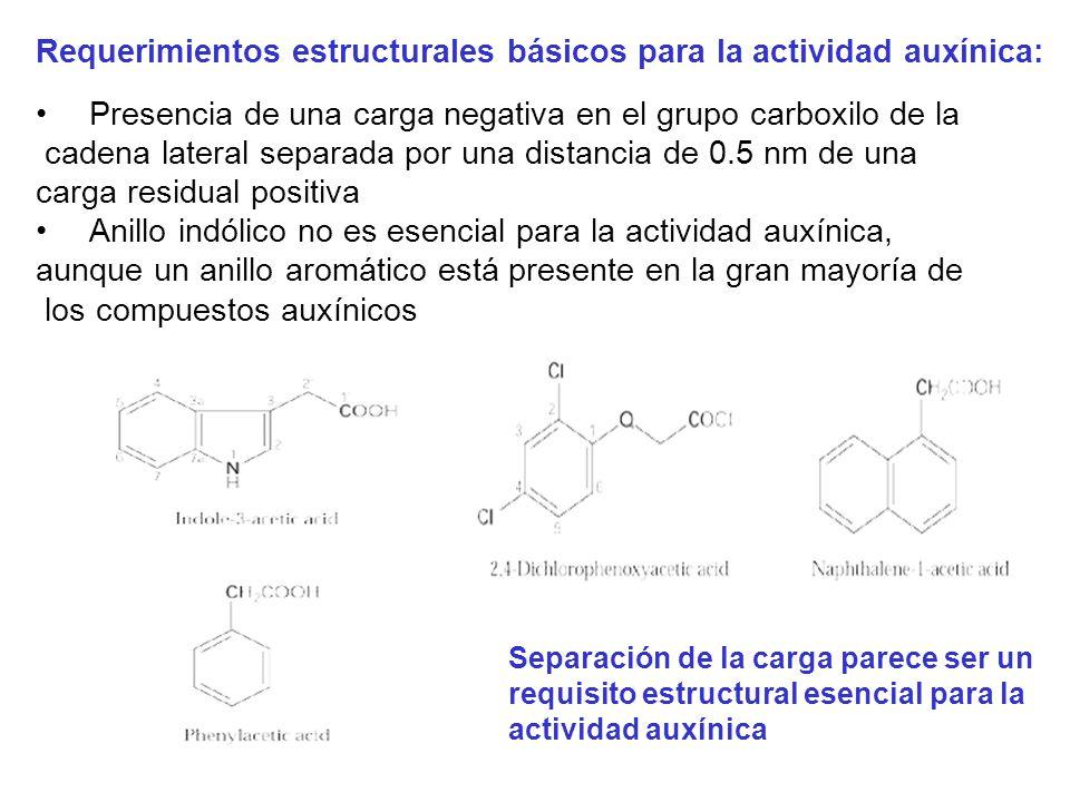 Requerimientos estructurales básicos para la actividad auxínica: