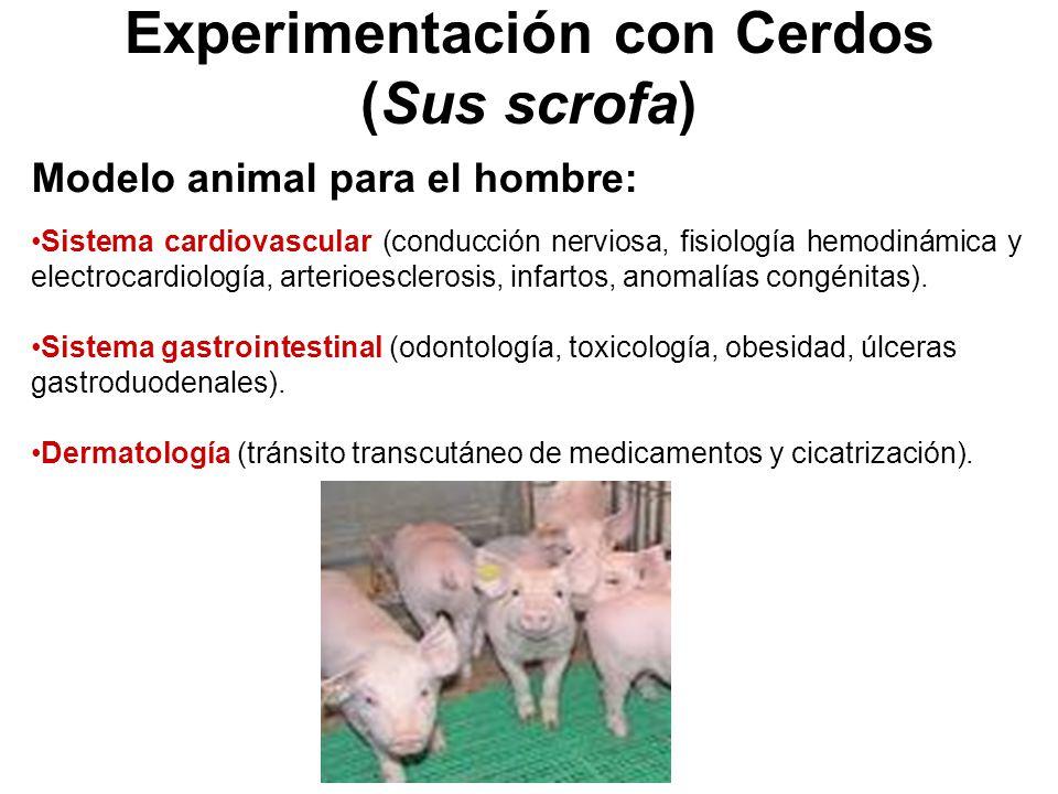 Experimentación con Cerdos (Sus scrofa)