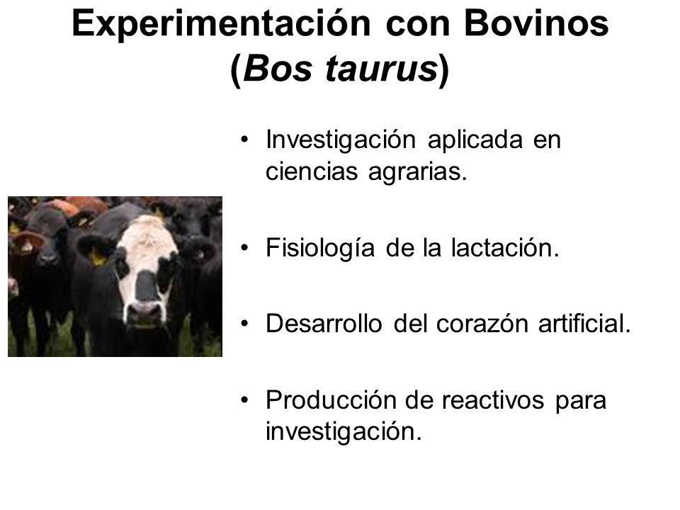 Experimentación con Bovinos (Bos taurus)