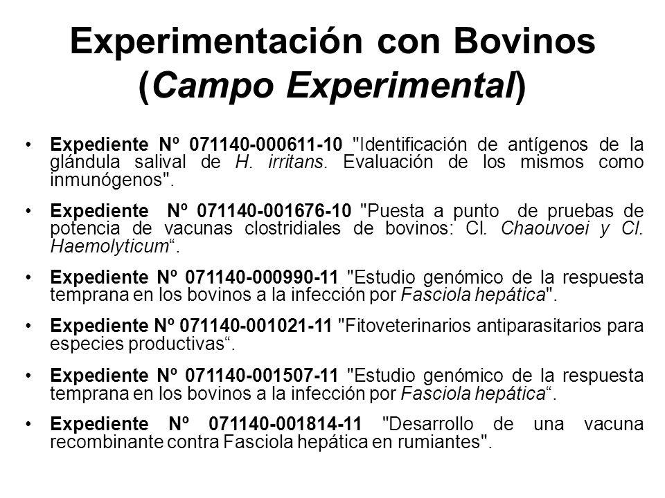 Experimentación con Bovinos (Campo Experimental)