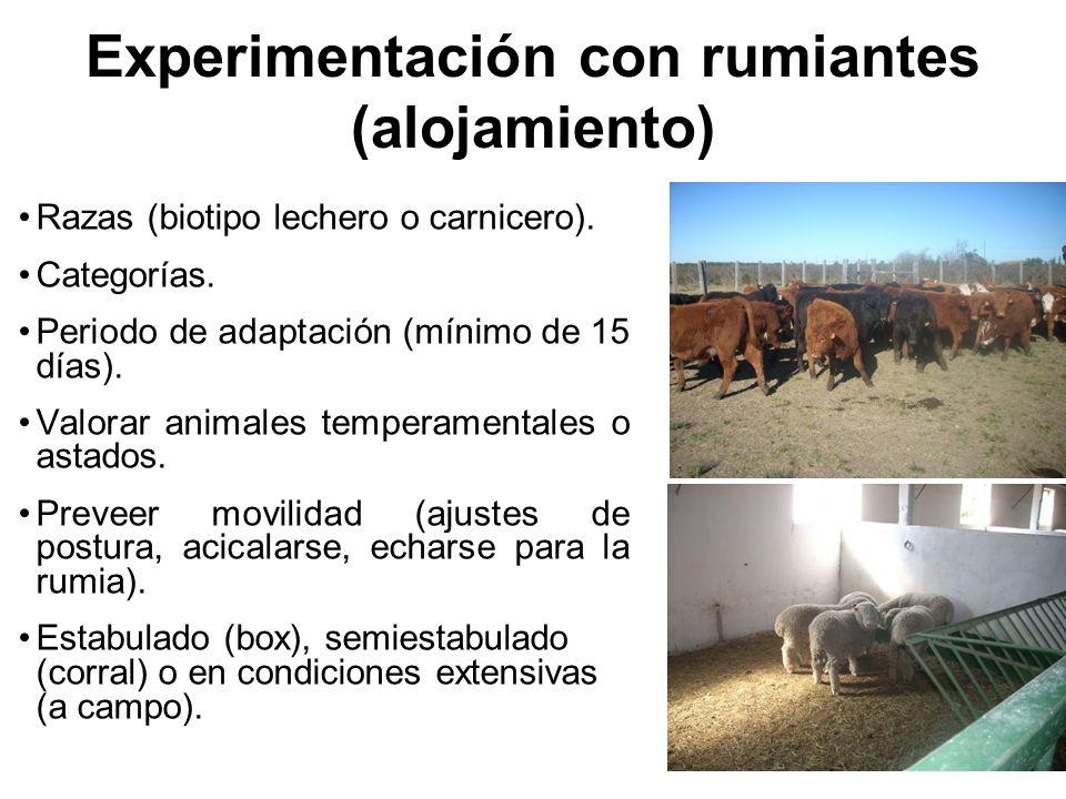 Experimentación con rumiantes (alojamiento)