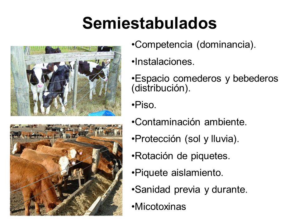 Semiestabulados Competencia (dominancia). Instalaciones.