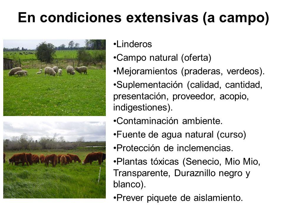 En condiciones extensivas (a campo)