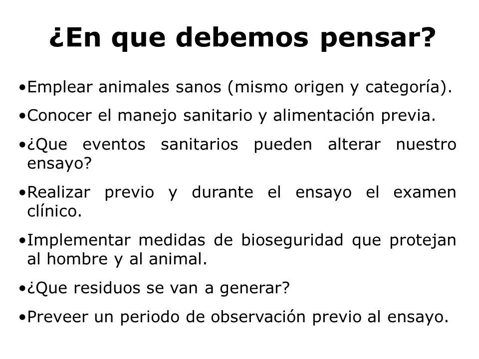¿En que debemos pensar Emplear animales sanos (mismo origen y categoría). Conocer el manejo sanitario y alimentación previa.