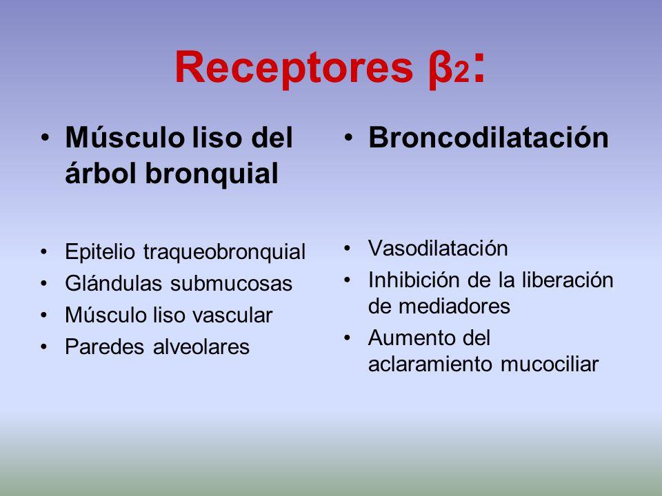 Receptores β2: Músculo liso del árbol bronquial Broncodilatación