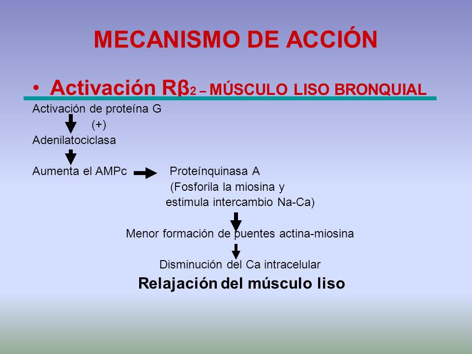 MECANISMO DE ACCIÓN Activación Rβ2 – MÚSCULO LISO BRONQUIAL