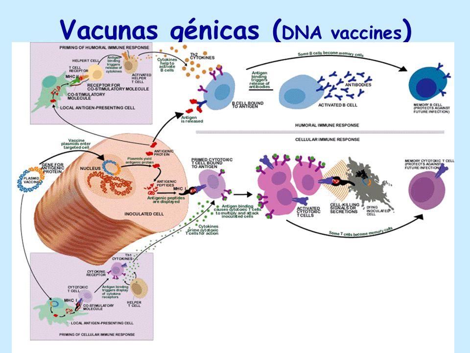 Vacunas génicas (DNA vaccines)