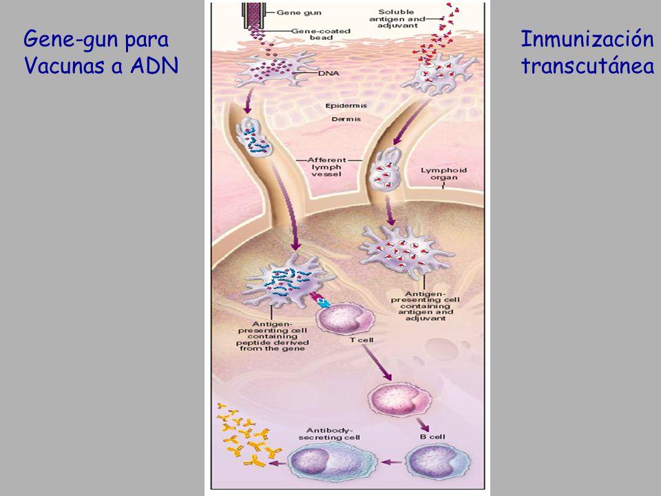 Gene-gun para Vacunas a ADN Inmunización transcutánea