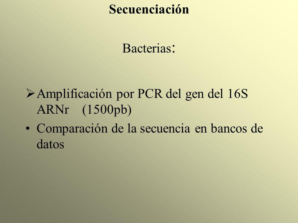 Secuenciación Bacterias: