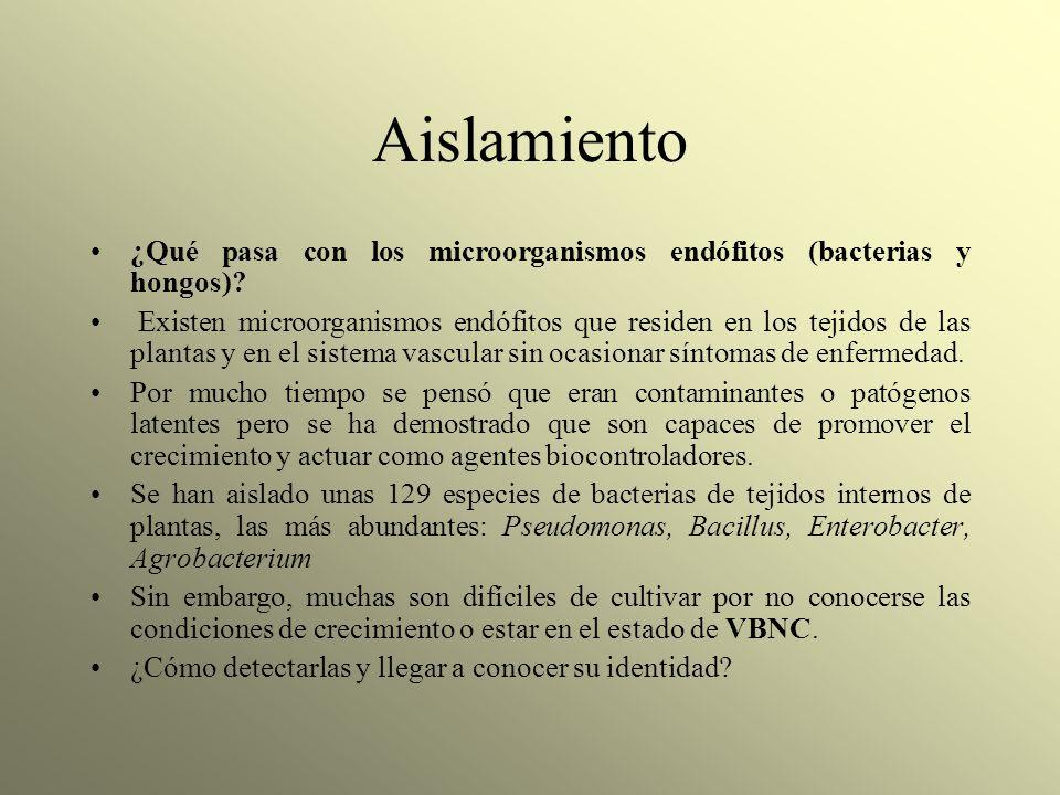 Aislamiento ¿Qué pasa con los microorganismos endófitos (bacterias y hongos)