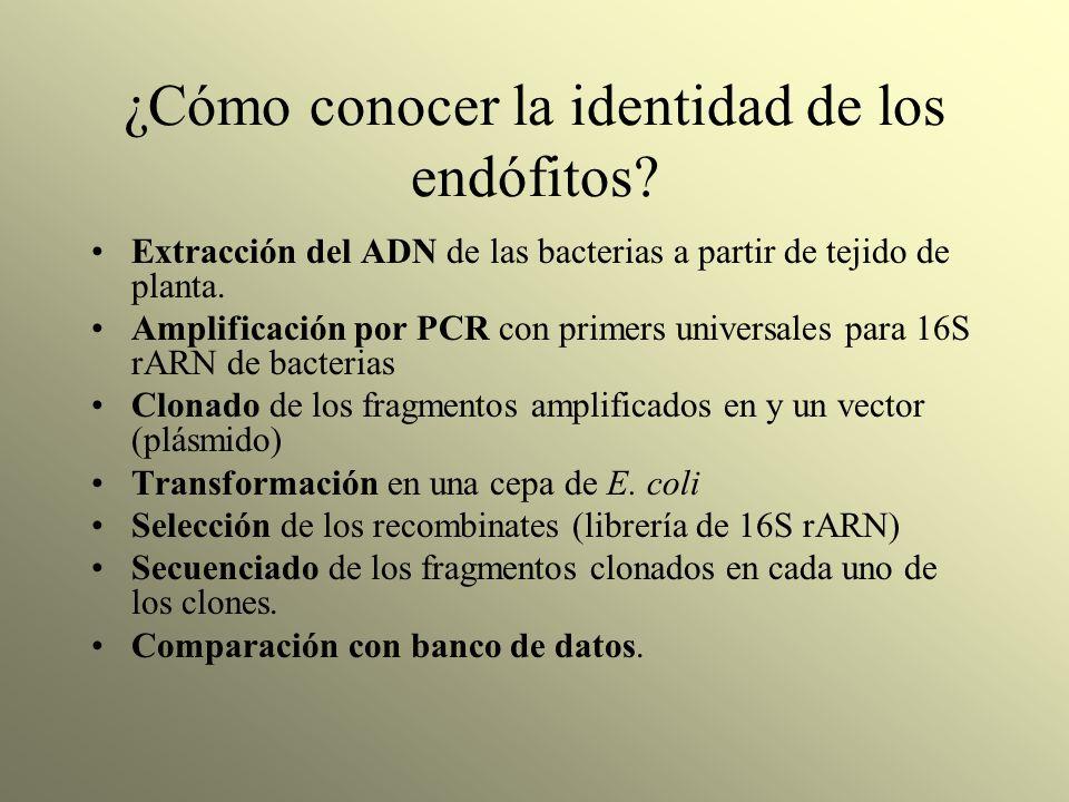 ¿Cómo conocer la identidad de los endófitos